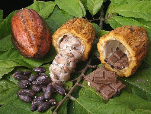 ¿Somos líderes cacaoteros otra vez? parece que sí
